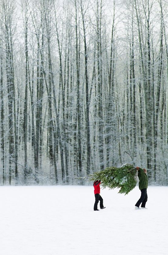 Love this picture - holidays! (carrying xmas tree home - w splash