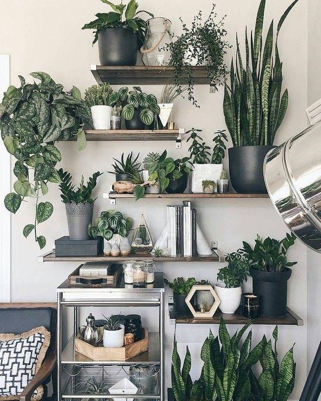 10 ausgezeichnete Ideen, um Zimmerpflanzen im Innenbereich anzuzeigen –