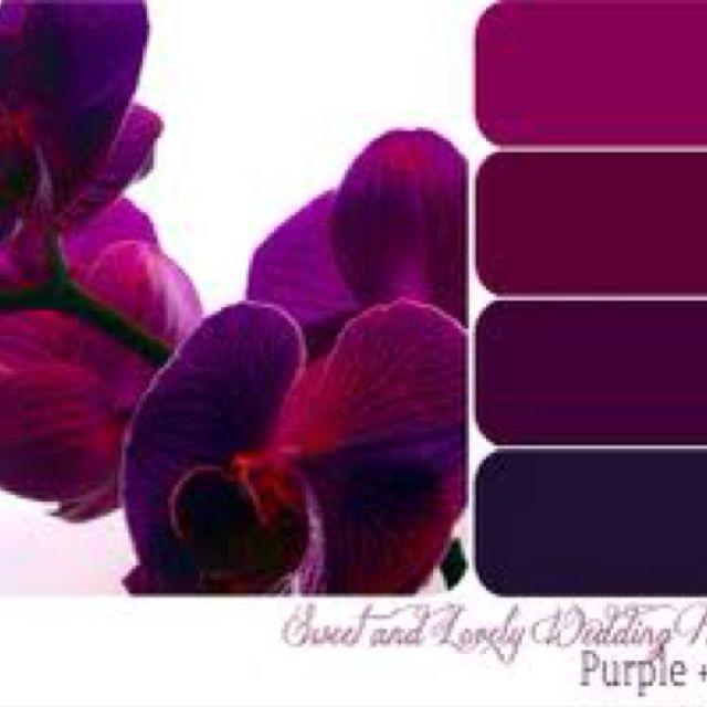 Purple Colour Scheme: 1000+ Ideas About Plum Color Palettes On Pinterest