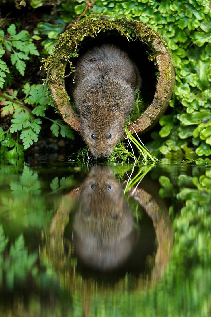 559 best animals water loving images on pinterest animals