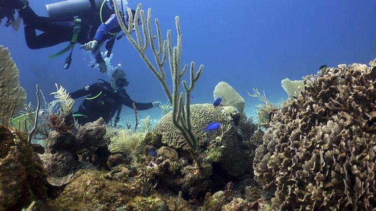 plongée à Riviera Maya avec mon fils
