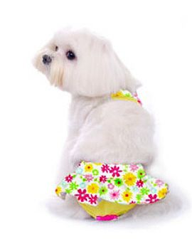 Zuma Dog Bikinis by Pooch OutfittersCountry floral bikinis with elastic straps and velcro closures. Bottom has a bow detail and velcro closures. 95% polyester, 5% spandex. Yellow. Great for the beach, pool or just lounging on hot days. Belly area is open to avoid soiling.  95% polyester, 5% spandex. Butterscotch.   PupRwear has dog clothes for toy breeds  and small & large dogs .All the latest styles, and current fun items that dog boutiques carry.