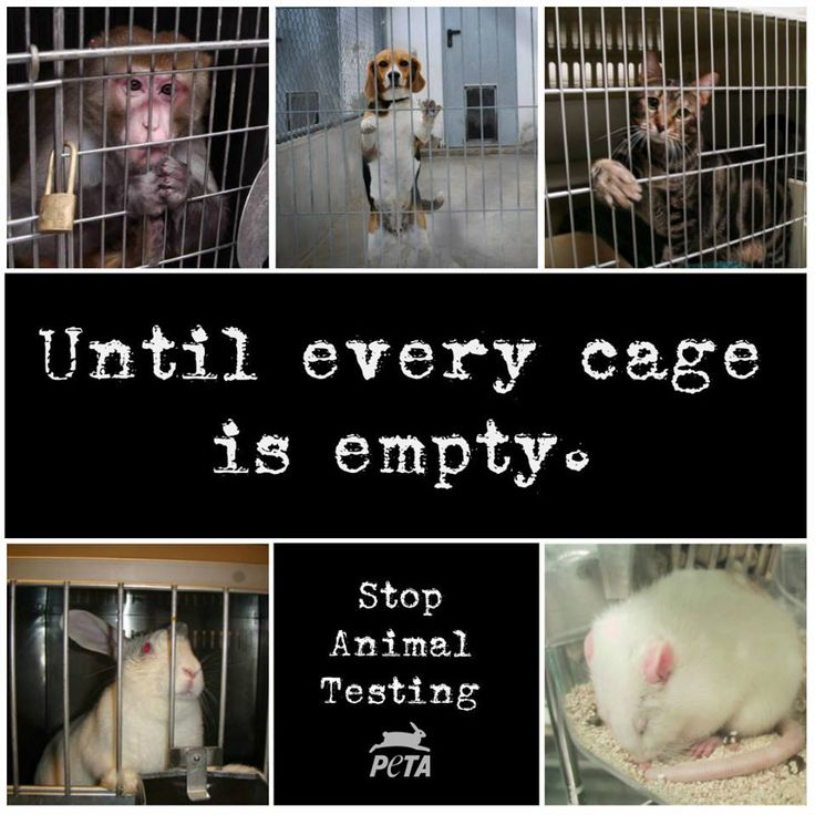 Stop Animal Testing. Buy cruelty free products!