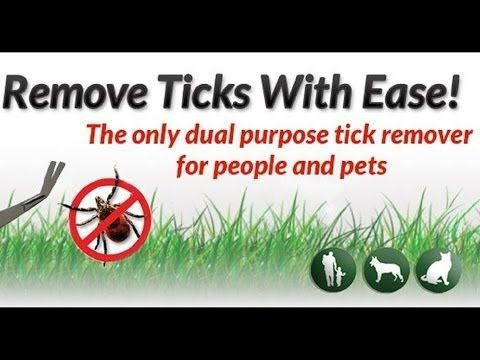 Ticks are not a parasite that you want to mess around with! It's best to have the best dog tick remover on hand to get rid of them ASAP!