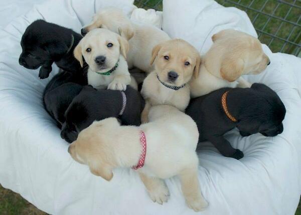 Puppies!!!!!