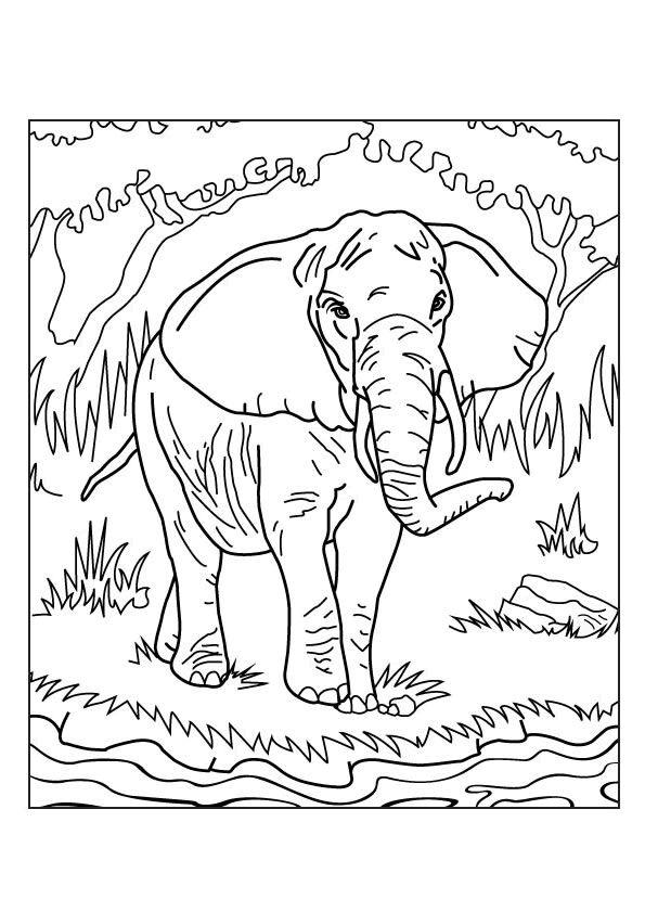33 best coloriages d 39 afrique images on pinterest coloriages afrique et coloriage gratuit - Dessin d un elephant ...