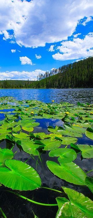 Twin Lake at Yellowstone National Park, Wyoming, USA