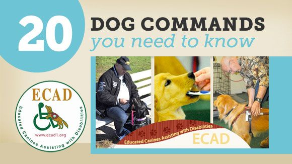20 Dog Commands You Need to Know | Dog Training | PetCareRx    -with step by step instructions