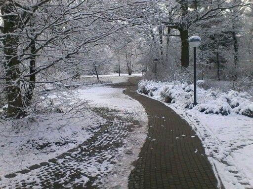 Schneeüberraschung zum 2. Feiertag. Schnell einen Spaziergang vor dem Mittagessen machen bevor die weiße Pracht verschwindet.