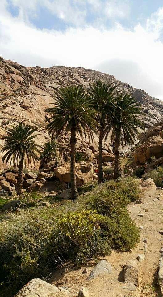 Fuerteventura, Islas Canarias, Spain.