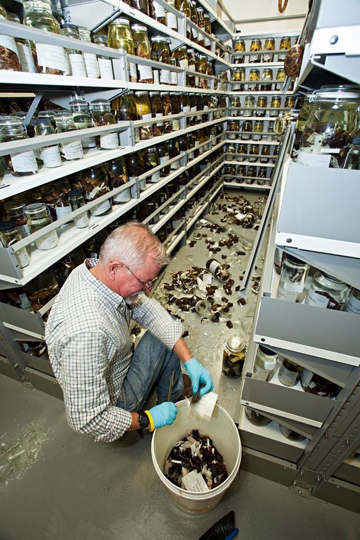 Museum specialist Charley Potter sorts fluid preserved specimens of bats from research collections at the Smithsonian's Museum of Natural History. Glass jars holding the specimens toppled and smashed during the Aug. 23, 2011 earthquake. Eight jars of fish specimens located at the Smithsonian's Museum Support Center, a storage and research facility in Suitland, Md., also fell from their shelves. The specimens have been collected and re-secured in temporary holdings. (Photo by James DiLoreto)