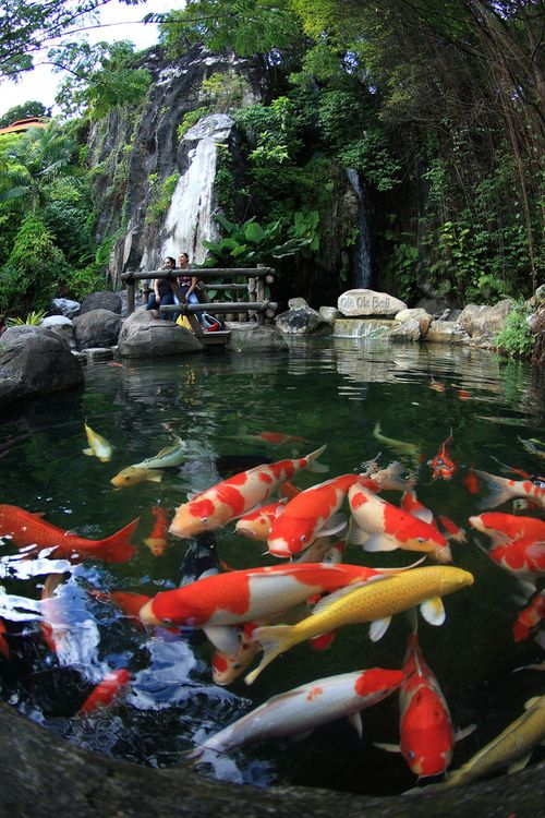 418 best koi in japanese gardens images on pinterest for Koi pool water