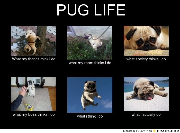 Really Funny Memes About Life : Pug meme life generator what i do pugs