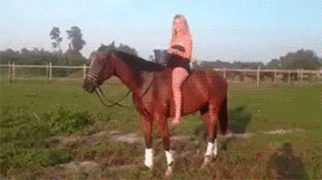 Because your horse isn't having it:   21 Reasons Why The Ice Bucket Challenge Needs To End Right Now