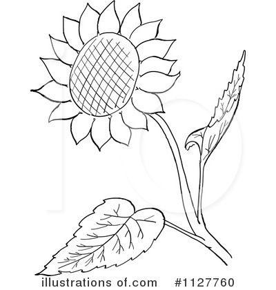line art pattern - Buscar con Google | Flower drawing ...