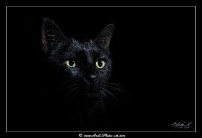 Anubis - Chat noir