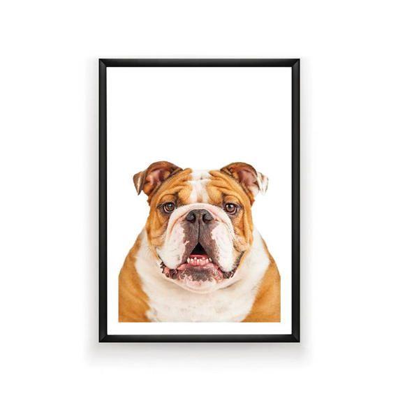 English Bulldog Print Dog Prints Dog Poster by SingleWavePrints