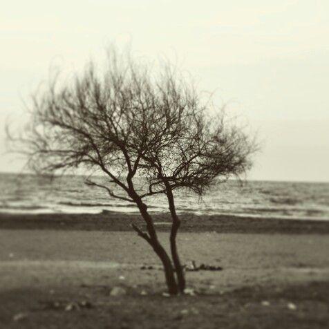 Yalnız. ..