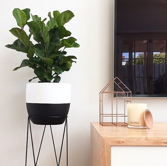 Kmart Styling Dipped pot plant and plant stand