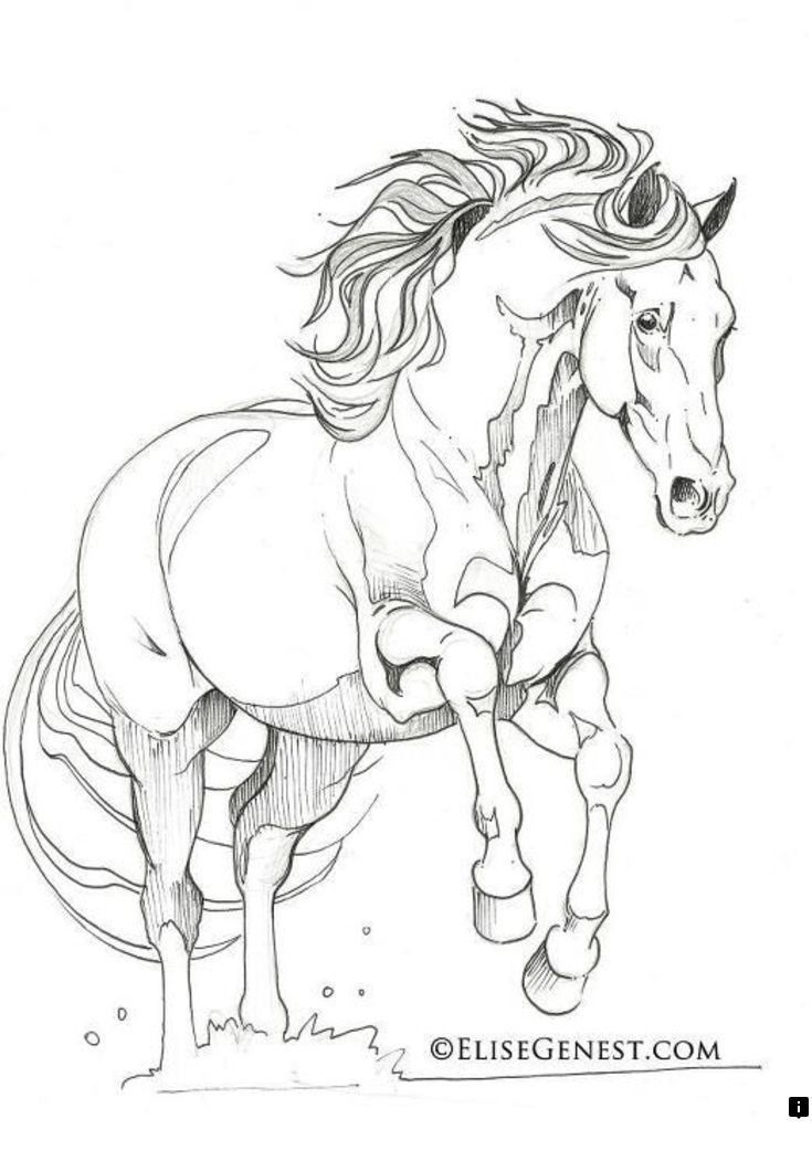Read Information On Andalusian Horse Just Click On The Link To Find Out More Do Not Miss Our Web Pages Horse Coloring Pages Horse Drawings Horse Coloring