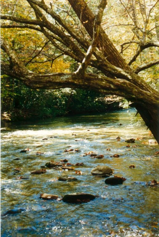 300 best images about still more beautiful pictures on for Davidson river fly fishing