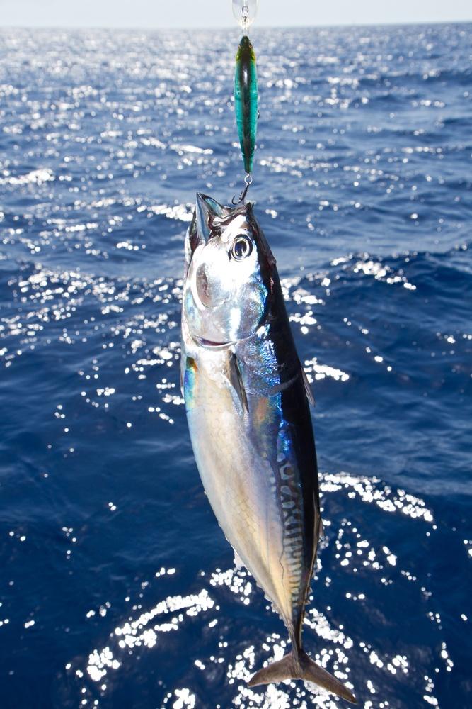 #bvi sports #fishing #tourism
