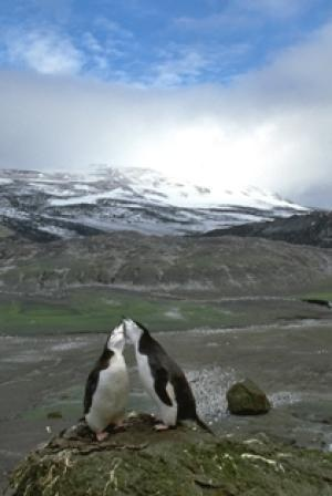 Warming Antarctic Brings Changes to Penguin Breeding Cycles~   http://www.sciencedaily.com/releases/2012/03/120321123758.htm