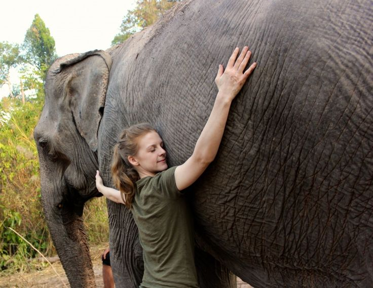 3 reputable elephant sanctuaries in Thailand   This is going on the TOP of my bucket list