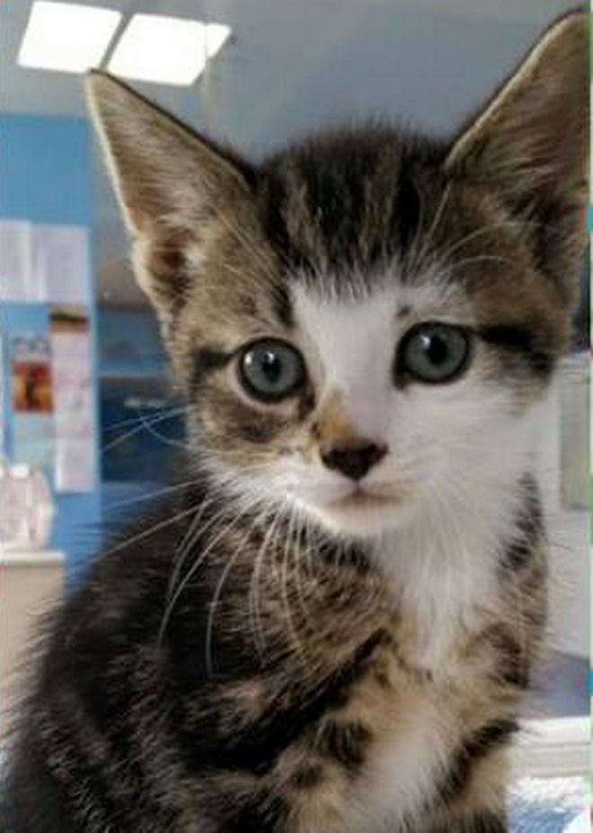Liverpool kittens in need of new home as cat rescue centre saved from closure - Liverpool Echo