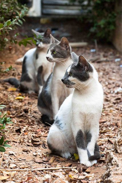 """* * """" Don'ts move tillz me says 'bail'. """"  [2ND CAT: """" Der be one in de tree, too.""""  ---------------------------------------[3RD CAT: """" Survival be crucial."""""""