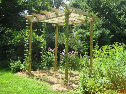 cute trellis for hops good way to work them into the