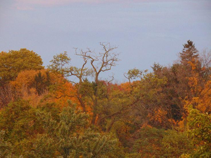 Autumn | By @shanarahsphotos