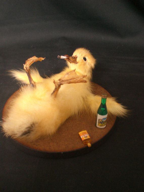 Taxidermy Duckling Drunken Ducky little party animal. $30.00, via Etsy.