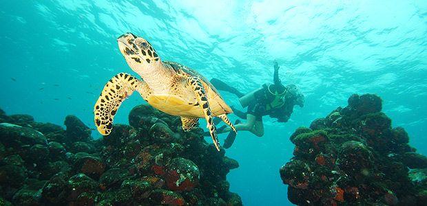 Tartaruga-marinha no mar de Fernando de Noronha
