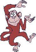 Gif kiwająca się małpa Małpy Zwierzęta