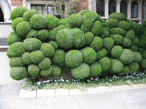 1000  images about garden/outdoors/landscaping on pinterest ...