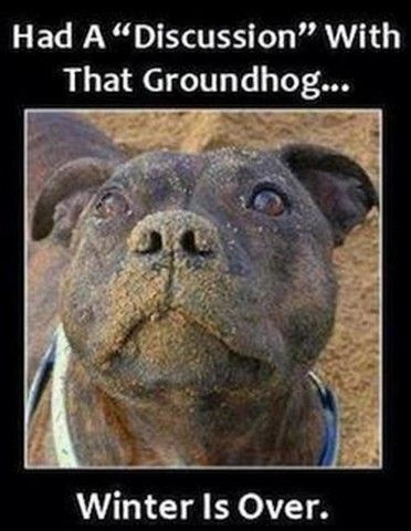 a67fa4ca4b0f34c88b8c7c134e9eda90 ground hog groundhog day the 25 best ground hog day meme ideas on pinterest funny dog,Funny Groundhog Meme