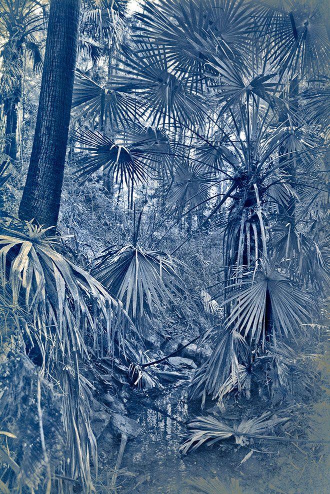 Danie Mellor   Australian contemporary artist