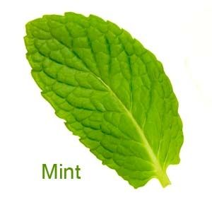 Refreshing, Super-cool, A beautiful fresh mint flavour with mild hints of citrus