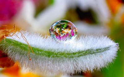 Flowers in a water drop wallpaper