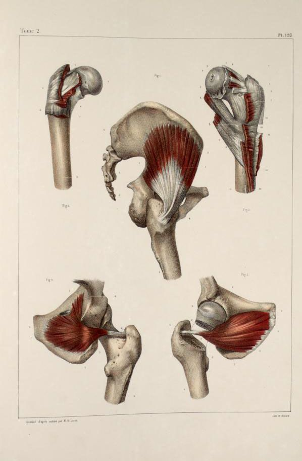 85 best Reference/ Body/ Muscles images on Pinterest | Anatomy ...