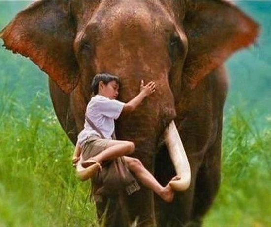 """""""The Very Special Loving Bond ~ Between A Boy And An Elephant..."""""""