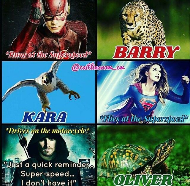 Barry Kara and Oliver as animals Cheetah Hawk and Turtle