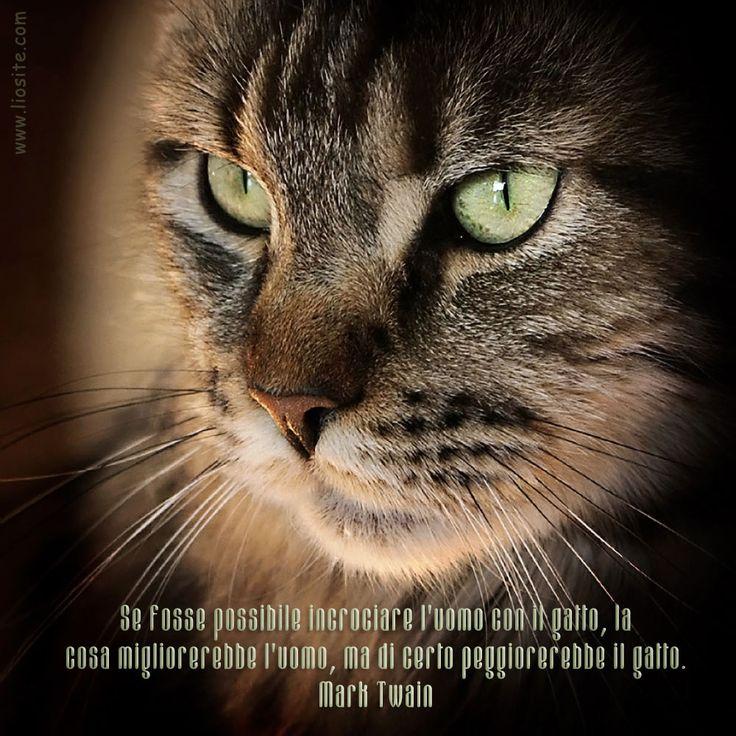 """Meglio andare avanti con le sole immagini .... """"Se fosse possibile incrociare l'uomo con il gatto, la cosa migliorerebbe l'uomo, ma di certo peggiorerebbe il gatto."""" Mark Twain #marktwain, #gatto, #uomo, #miglioramento, #peggioramento, #foto, #graphtag, #italiano, #incrociare,"""
