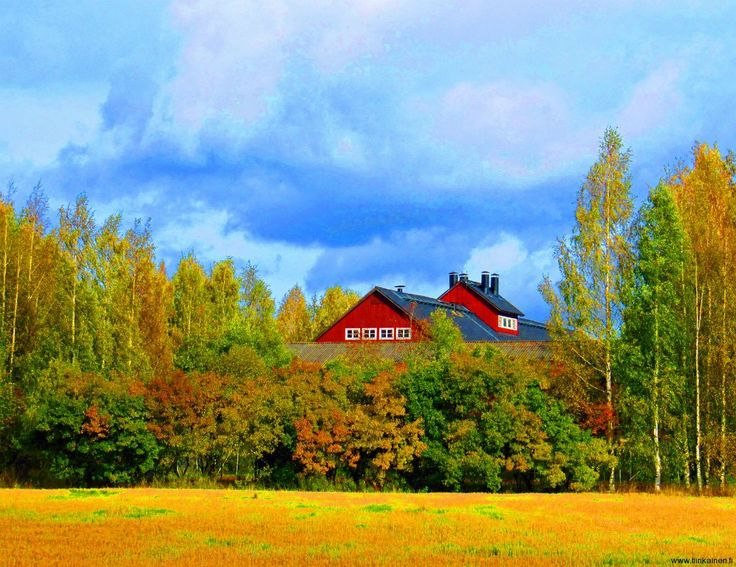 Picture of the Day 30th September 2012: fall colours bursting in Helsinki!