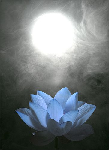Full moon and Blue Lotus Flower - Lotus Petals  #fullmoon #lotus #lotuseye