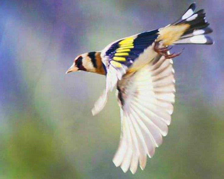 25 best ideas about oiseau du paradis on pinterest oiseau de paradis oiseau paradis and les. Black Bedroom Furniture Sets. Home Design Ideas