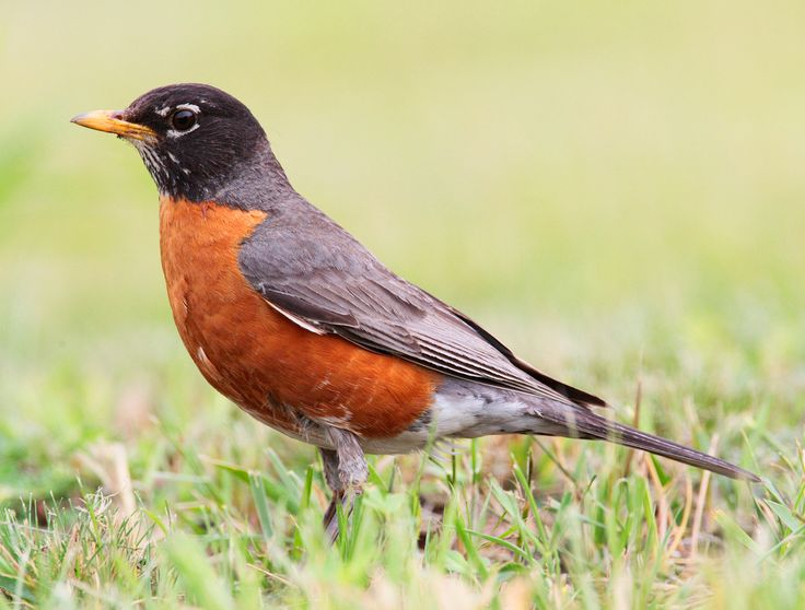 Saw one of these today at the Branches of Niagara Campground.