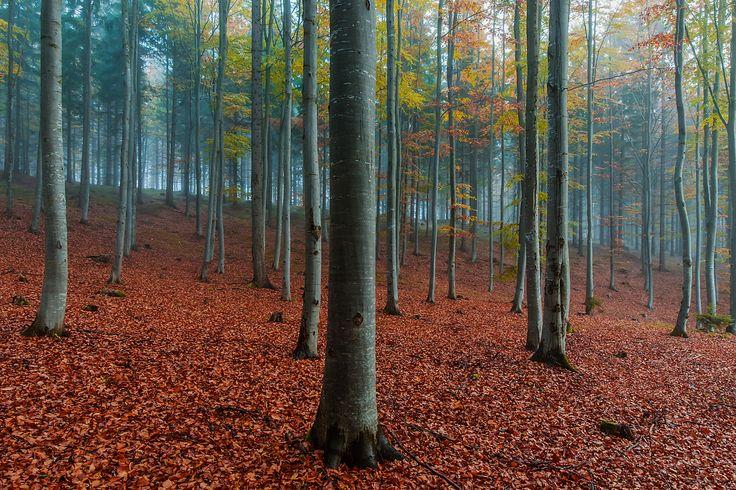 Buchen in den Farben des Herbstes by Leo Pöcksteiner on 500px