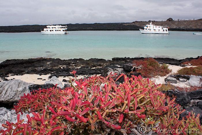 Sombrero Chino, Galapagos    http://www.asherworldturns.com/volcanic-formations-on-sombrero-chino/